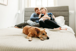 dog on bed in manhattan maternity photographer charis elisabeth 7832